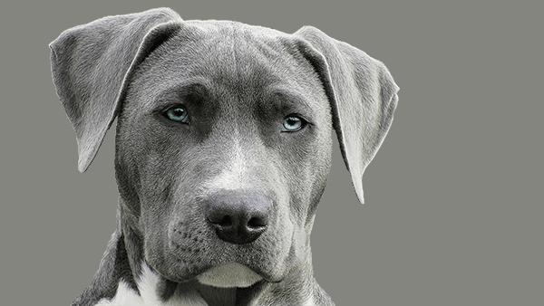 Charlotte veterinary radiology