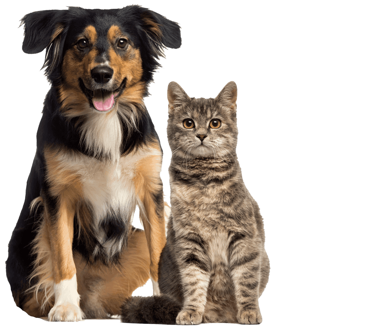 Charlotte veterinarian cat and dog