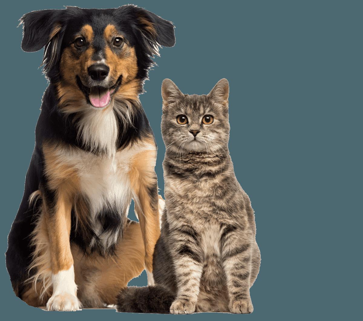 Charlotte veterinarian tour