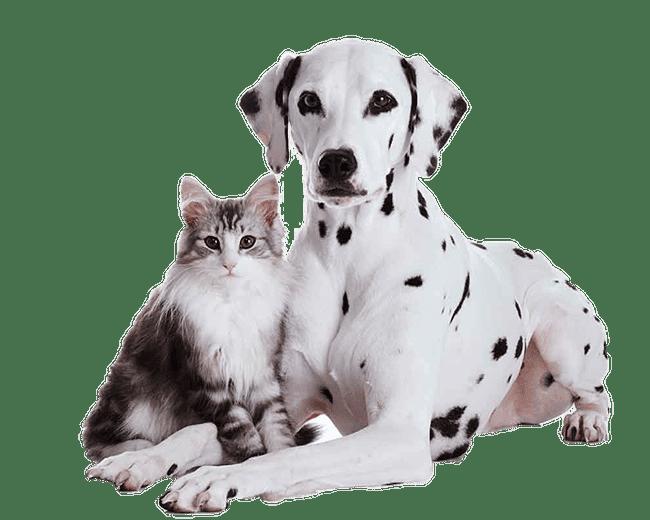 Charlotte vet cat and dog wellness